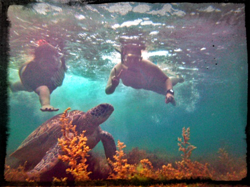 Swimming with the slow, deliberate and graceful Pawikans of Apo Island