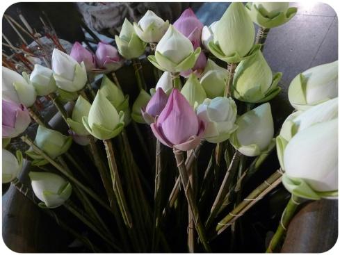Lotus blloms for Buddha